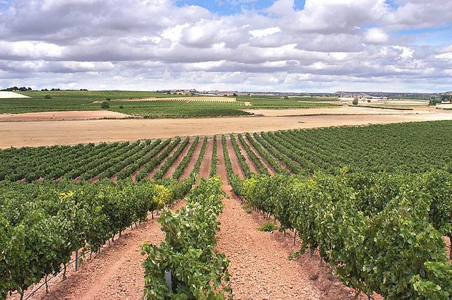 Vinmarker i Ribera del Duero