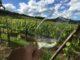Vinen får en ny dimension, når man nyder den i den mark, hvor druerne er dyrket.