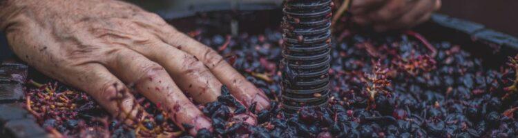 Quiz: 20 spørgsmål om vinproduktion