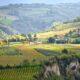 12 spørgsmål om italiensk vin