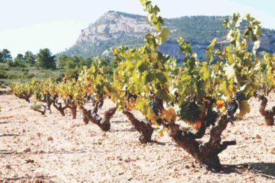 Spanske Castaño er uløseligt forbundet med Monastrell