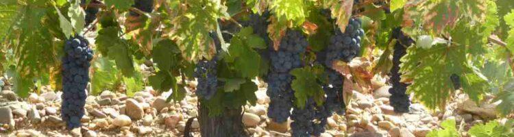 Quiz: 12 spørgsmål om spansk vin